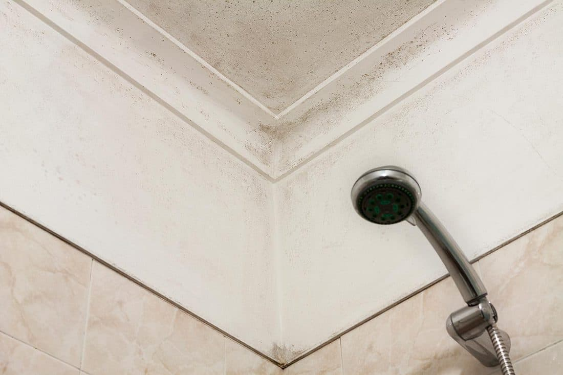 Moldy corner in a shower room